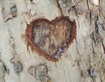hart boomschors (2)